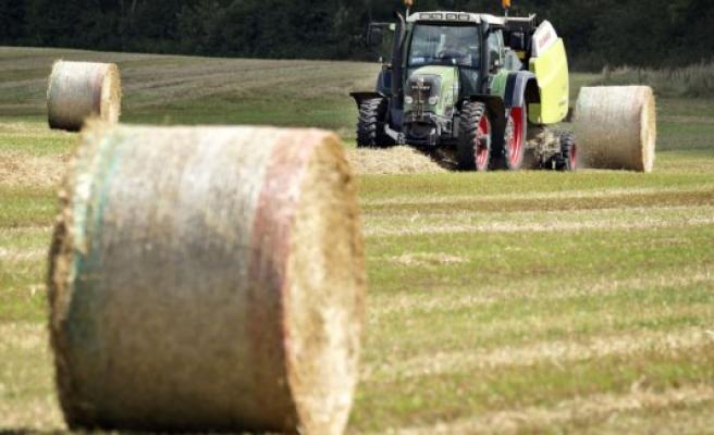 Hundreds of bigballer burner is still on the farm