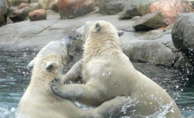 Polar bear cub died in Aalborg