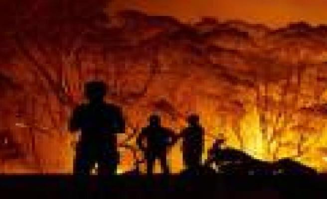 The biodiversity of australian, in flames