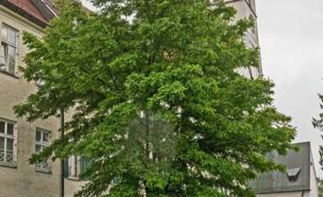 Ebersberg, Bavaria, black locust as an Alternative to the spruce | Ebersberger Land