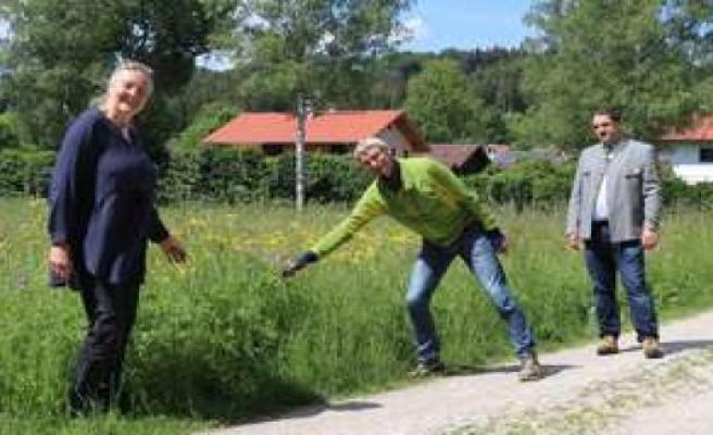 Eurasburg: Local Agenda wants to wild flowers sprout   Eurasburg