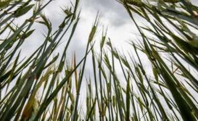 Hadenwang (Bavaria): farmer suffocates in grain - death in the case of repairs | Bavaria