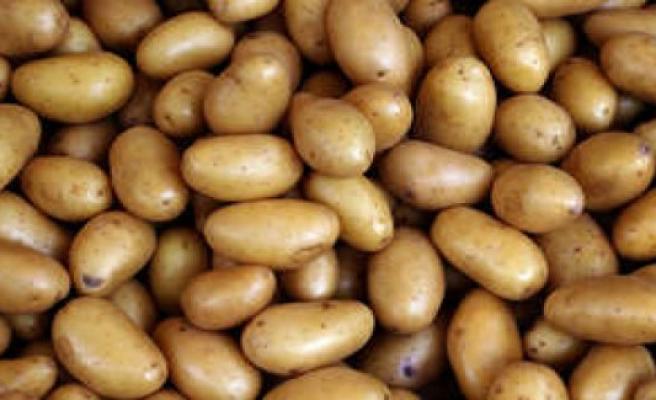 Recipe for potato puree: This secret ingredient makes it really creamy   enjoyment