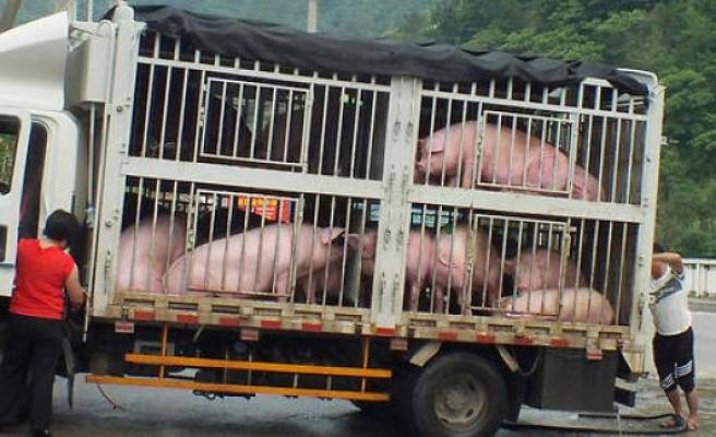 China : after the coronavirus, swine influenza ? - The Point