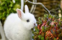 A summer retreat for rabbits and Guinea pigs | animals