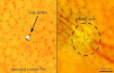 Repaired in a few seconds: the Material on Protein-based...