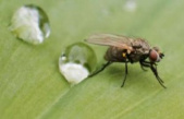 Home remedies for flies: to get rid of the pests quickly | Housing
