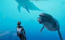 Beyond Blue, A diving adventure for nature lovers   Multimedia