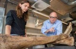 Schöningen shows forest elephant-skeleton | travel