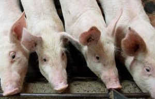 China : a study reveals a swine influenza virus with...