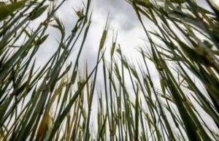 Hadenwang (Bavaria): farmer suffocates in grain -...