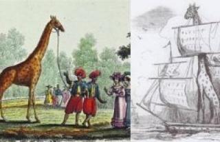 June 30, 1827. The day the giraffe Zarafa arrives...
