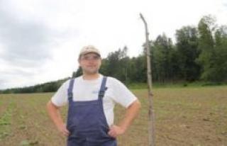 Organic farmer hanging dead crows on a gallows - animal...