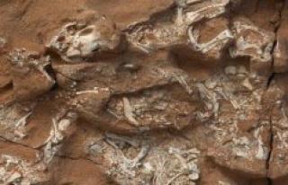 The first dinosaur eggs were soft