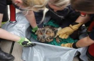 An owl falls into a 40-Meter-deep wells - the fire...