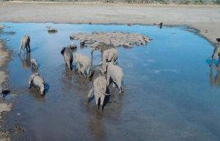 Botswana : the sudden death of hundreds déléphants...