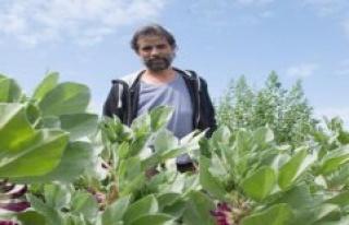 Gram village: Quick green stuff: weeding and Harvesting...