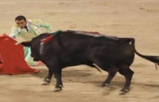 Spanish bull fighting started again: bull dies miserably...