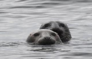 Wilhelmshaven, Germany: Wadden sea Secretariat informed...