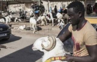 Senegal : a Tabaski pressure of the Covid-19 - The...
