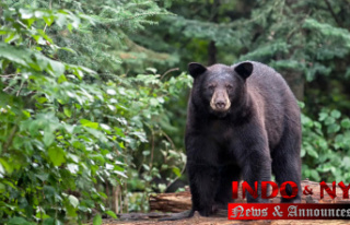Pennsylvania hunters picked 3,608 black bears throughout...