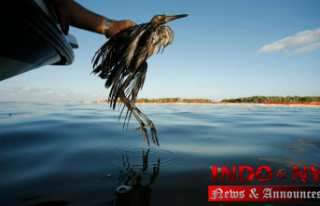 US Suggests ending rule that Diminished wild bird...