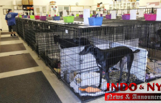 California to allow more canine blood banks, walk-in...