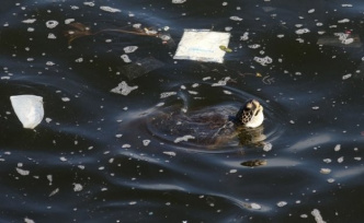 Therefore, turtles plastic eat