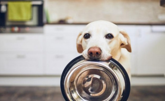 Every dog eats a different way: The best tips for an age-appropriate dog food