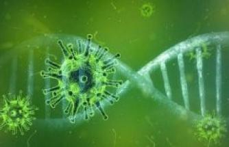 Fulda: Coronavirus – Fulda: 30 Ill – United States: more Than three million cases