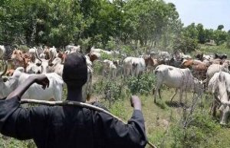 Burkina Faso : deadly attack a market of livestock in ballast - The Point
