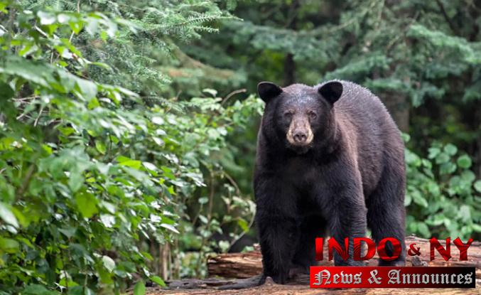 Pennsylvania hunters picked 3,608 black bears throughout 2020 season